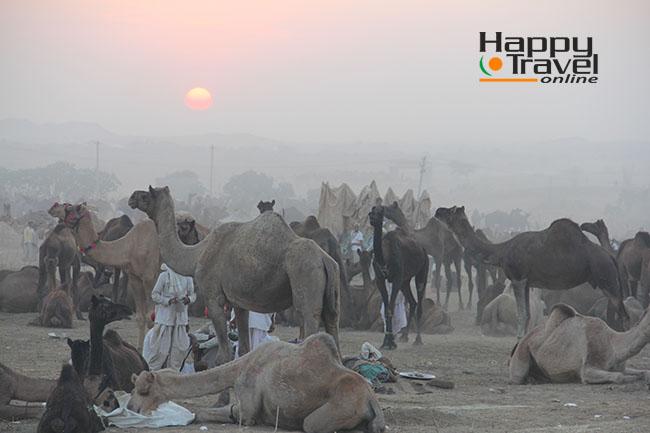 Imágenes de la Camel Fair