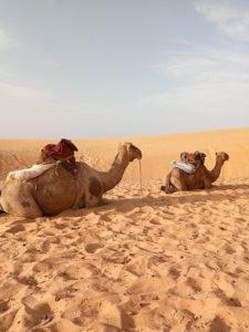 Camellos esperando