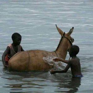 Niños y caballo